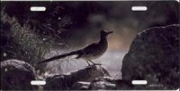 Roadrunner Photo License Plate