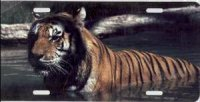 Bengal Tiger Photo License Plate