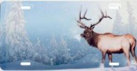 Winter Elk on Blue License Plate
