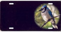 Blue Jay Offset License Plate