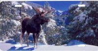 Winter Moose License Plate