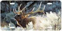 "3124 - ""Indian Summer"" Elk License Plate"