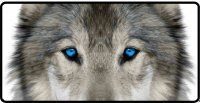 Lone Wolf Blue Eyes Photo License Plate