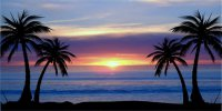 Blue Palm Tree Sunset Photo License Plate