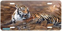 7506-Tiger in Water