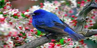 Colorful Blue Bird on Branch Photo License Plate