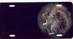 Squirrel Airbrush License Plate