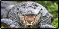 Alligator Close Up Photo License Plate