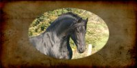 Friesian Horse Photo License Plate