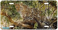7508-Spotted Leopard