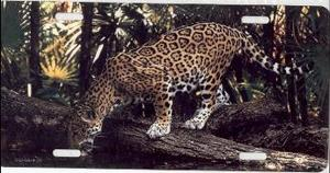 Pouncing Jaguar Photo License Plate